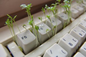 """Cress keyboard computer spice-15084"" / image de Dirk (Beeki®) Schumacher / depuis le site Pixabay / (Free for commercial use - No attribution required)"